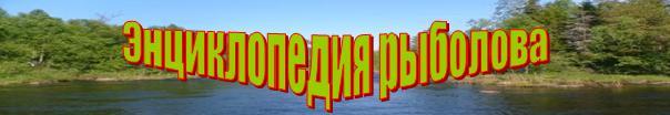прикормка для угря в русской рыбалке 3.9